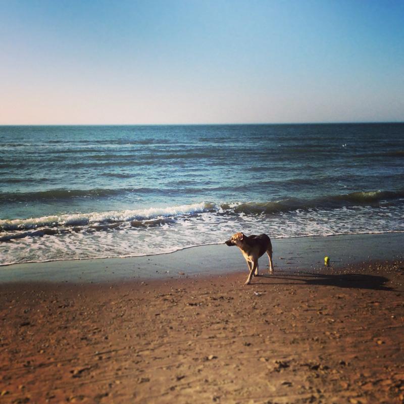 Hund am Strand in Noordwijk 2Hund am Strand in Noordwijk