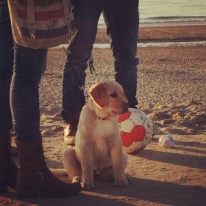 Hund am Strand in Noordwijk