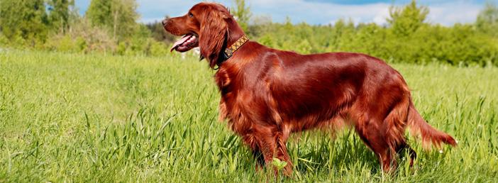 Tipps für Hundehalter: die richtige Fellpflege