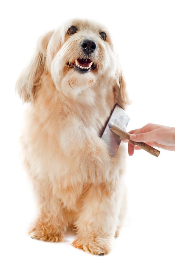 Fellpflege beim Hund - dazu gehört regelmäßiges Bürsten