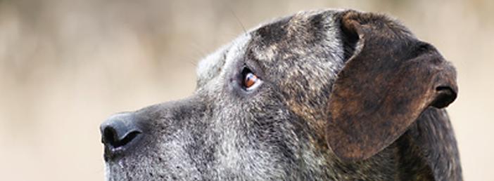Kann man einer Magendrehung beim Hund vorbeugen?