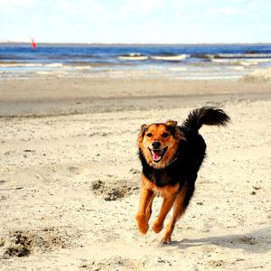 Strand Hundeschwanz