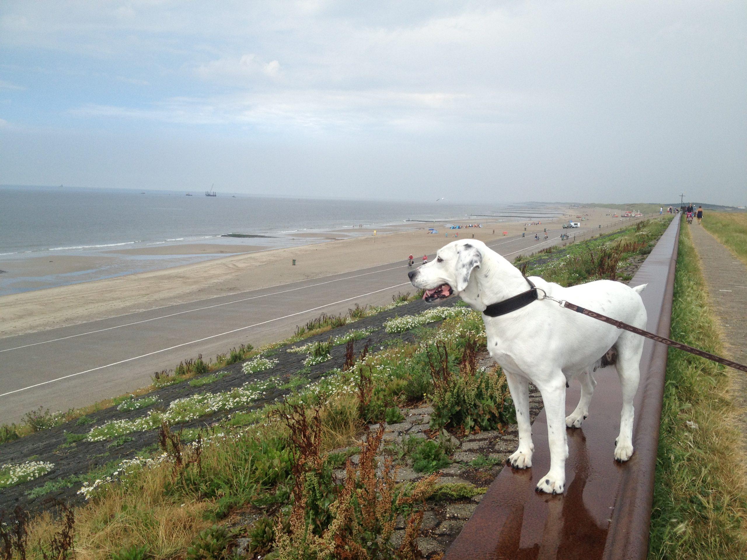 Hund Gassi am Strand
