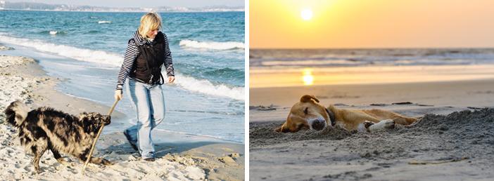 Hundestrand App für Nordsee und Ostsee