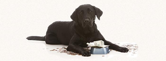 Was kostet ein Hund?