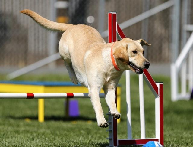 Hund beim Sport