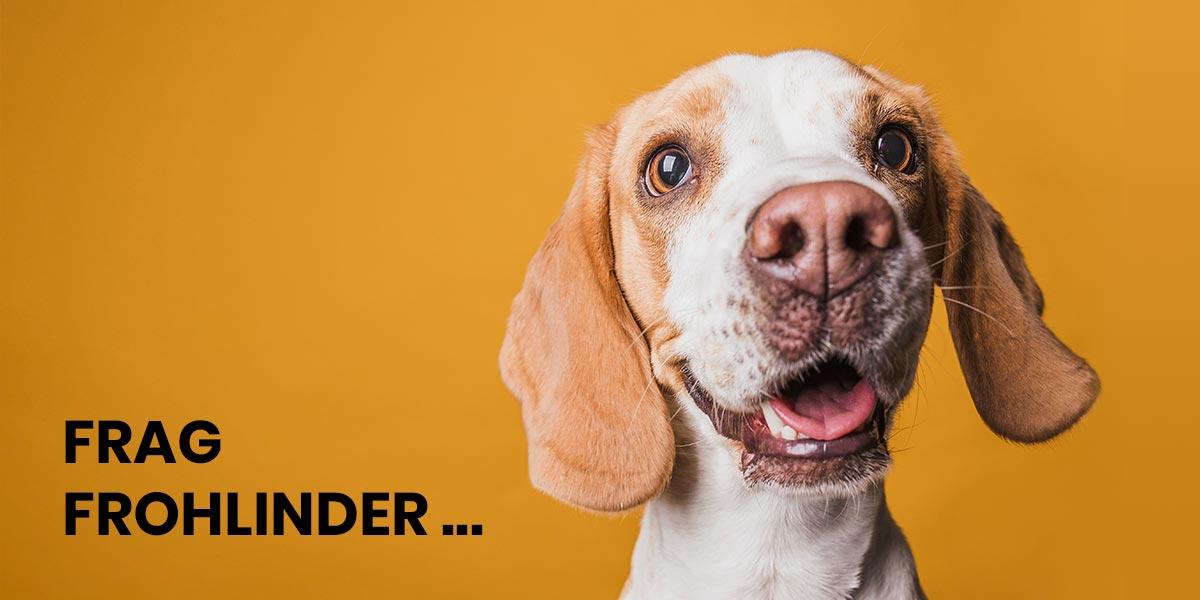 Welche Sorte Frohlinder Hundefutter ist die richtige für meinen Hund?