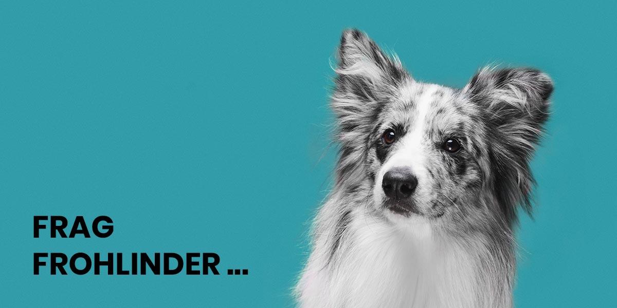 Wie lange ist Frohlinder Hundewurst haltbar und wie lagere ich sie?