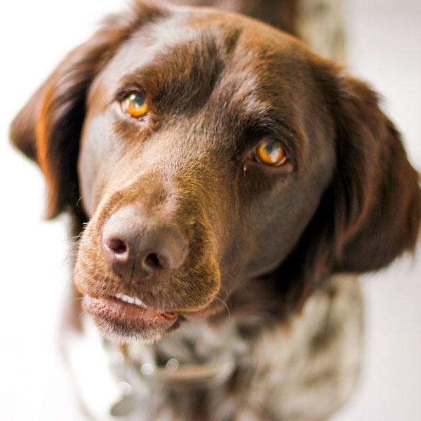 Gesundes Hundefutter ohne Zusatzstoffe von Frohlinder bequem online bestellen