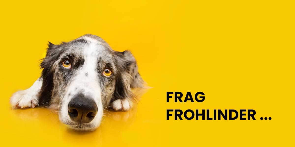 Durchfall bei Hunden – Die Vollnahrungs-Lösung